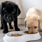 Dog Food as the Primary Source of Nutrition for Dogs